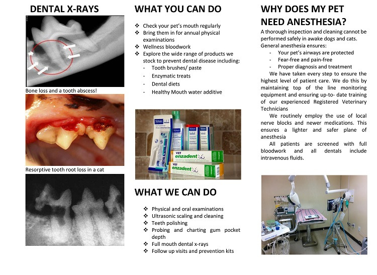 Brochure dental 2
