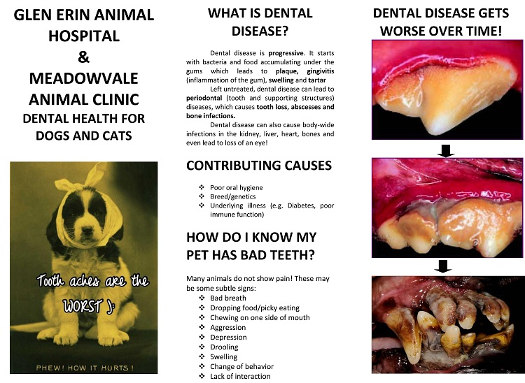 Brochure dental